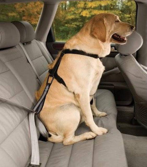 harnais-transport-chien